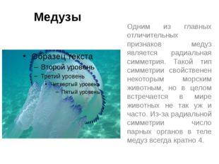 Медузы Одним из главных отличительных признаков медуз является радиальная сим