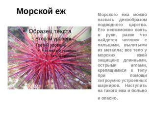 Морской еж Морского ежа можно назвать дикообразом подводного царства. Его нев