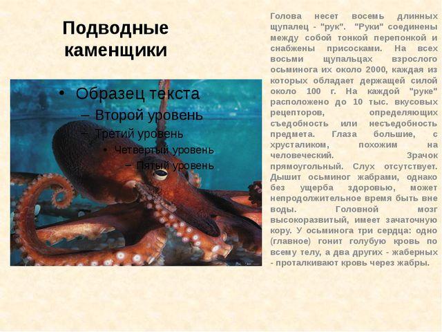 """Подводные каменщики Голова несет восемь длинных щупалец - """"рук"""". """"Руки"""" соеди..."""