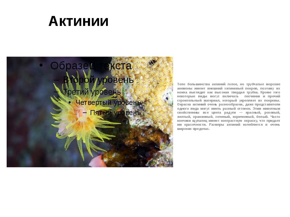 Актинии Тело большинства актиний голое, но трубчатые морские анемоны имеют вн...