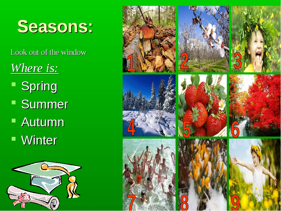 Seasons: Look out of the window Where is: Spring Summer Autumn Winter