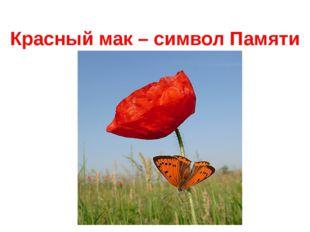 Красный мак – символ Памяти