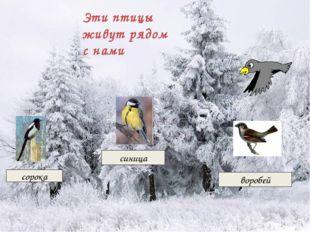 Эти птицы живут рядом с нами сорока синица воробей