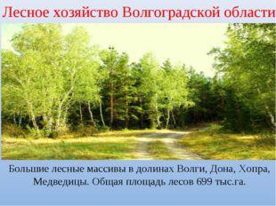 Лесное хозяйство Волгоградской области Большие лесные массивы в долинах Волги