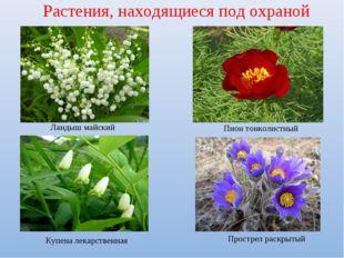 Растения, находящиеся под охраной Ландыш майский Пион тонколистный Купена лек