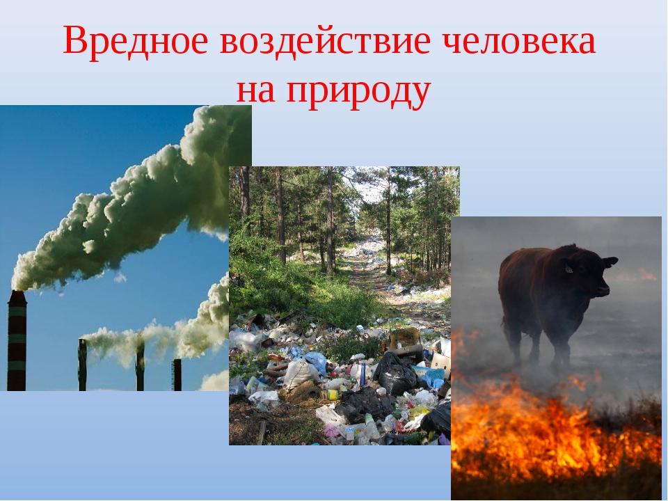 Вредное воздействие человека на природу