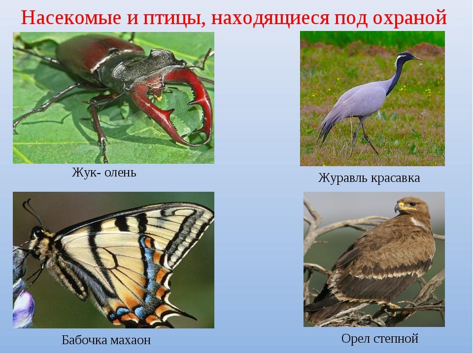 Насекомые и птицы, находящиеся под охраной Жук- олень Журавль красавка Бабоч...