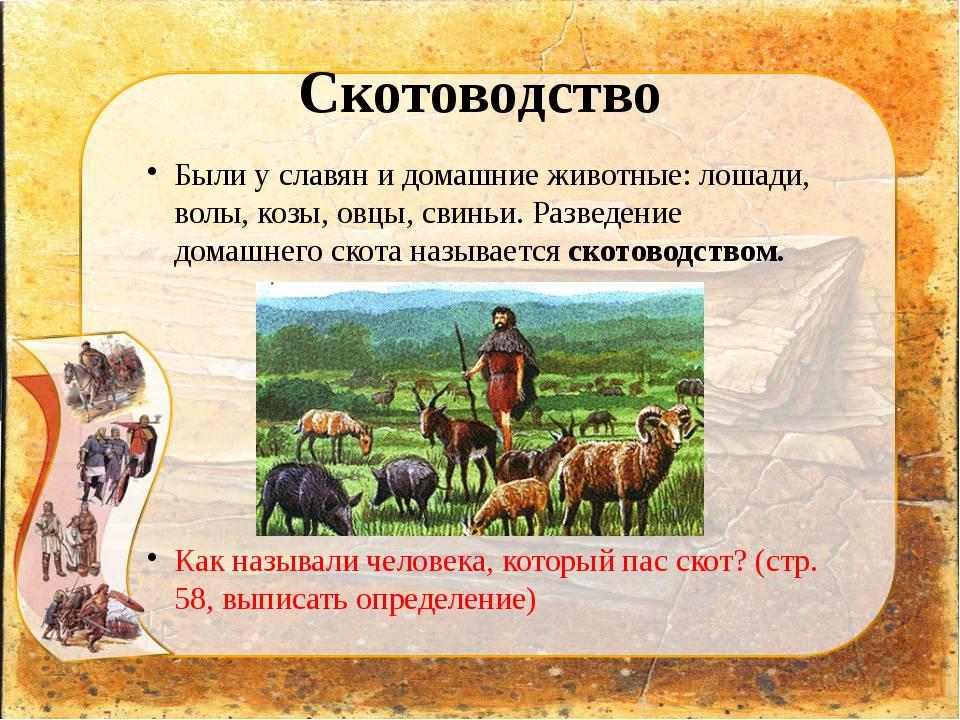 Скотоводство Были у славян и домашние животные: лошади, волы, козы, овцы, сви...