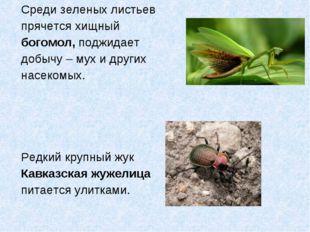 Среди зеленых листьев прячется хищный богомол, поджидает добычу – мух и други