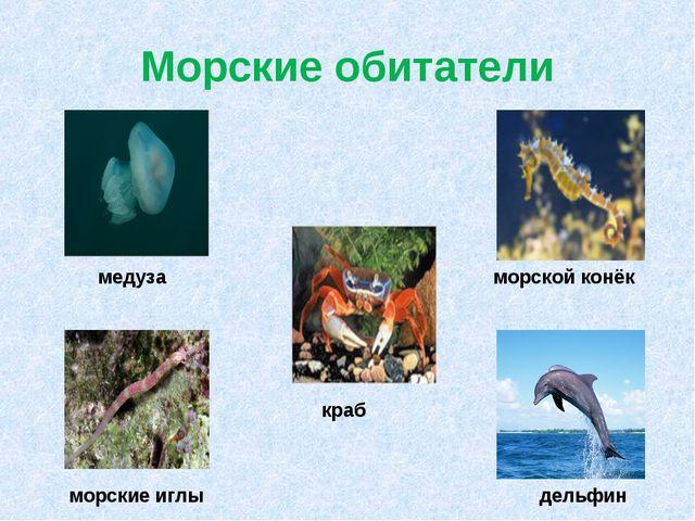 Морские обитатели дельфин краб морские иглы медуза морской конёк