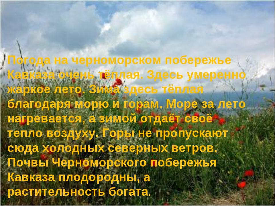 Погода на черноморском побережье Кавказа очень тёплая. Здесь умеренно жаркое...