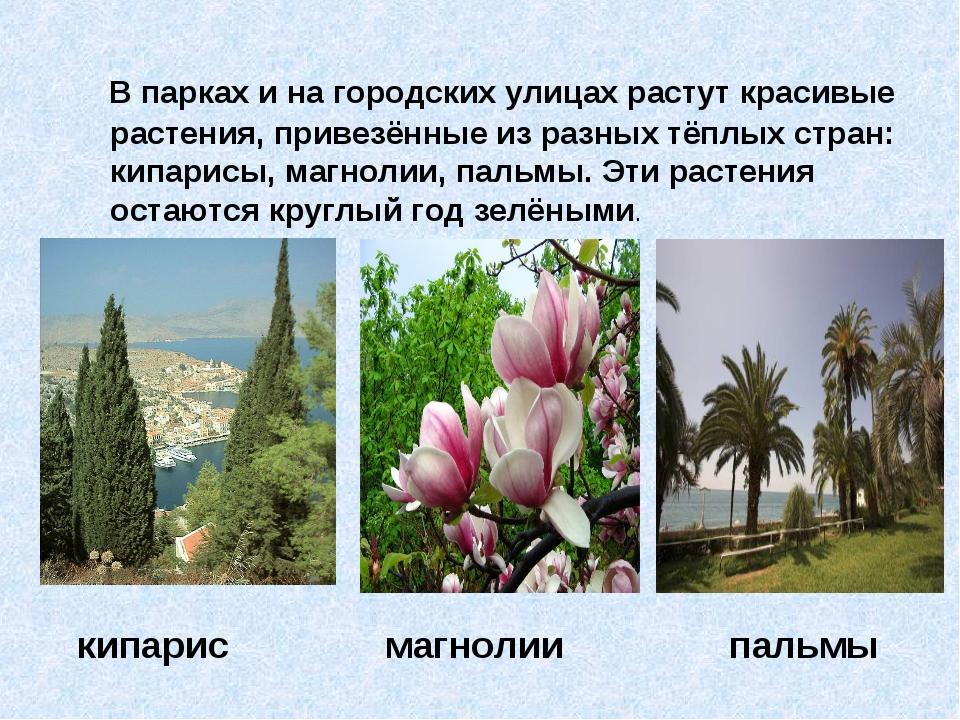 В парках и на городских улицах растут красивые растения, привезённые из разн...
