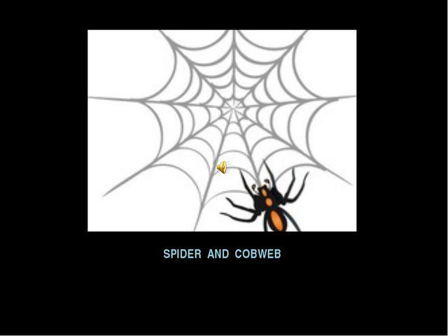 SPIDER AND COBWEB