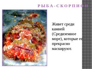 Живет среди камней (Средиземное море), которые ее прекрасно маскируют. Р Ы Б
