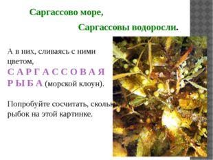 Саргассово море, Саргассовы водоросли. А в них, сливаясь с ними цветом, С А Р