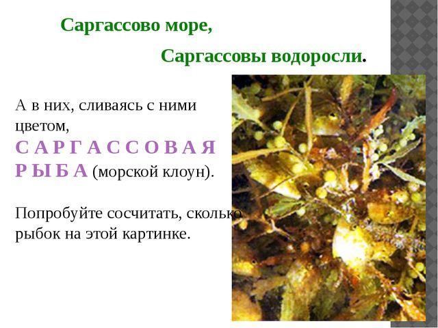 Саргассово море, Саргассовы водоросли. А в них, сливаясь с ними цветом, С А Р...
