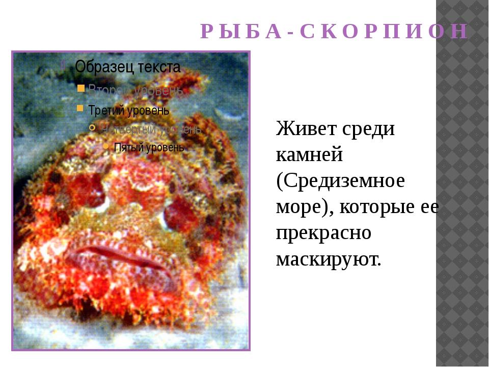 Живет среди камней (Средиземное море), которые ее прекрасно маскируют. Р Ы Б...