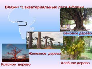 Влажные экваториальные леса Африки Эбеновое дерево Хлебное дерево Красное дер