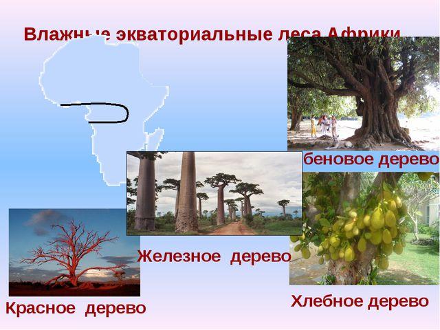 Влажные экваториальные леса Африки Эбеновое дерево Хлебное дерево Красное дер...