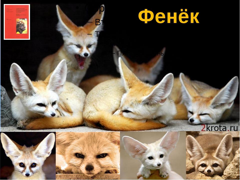 Фенёк