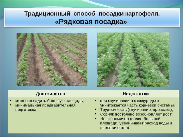 ДостоинстваНедостатки можно посадить большую площадь; минимальная предварите...