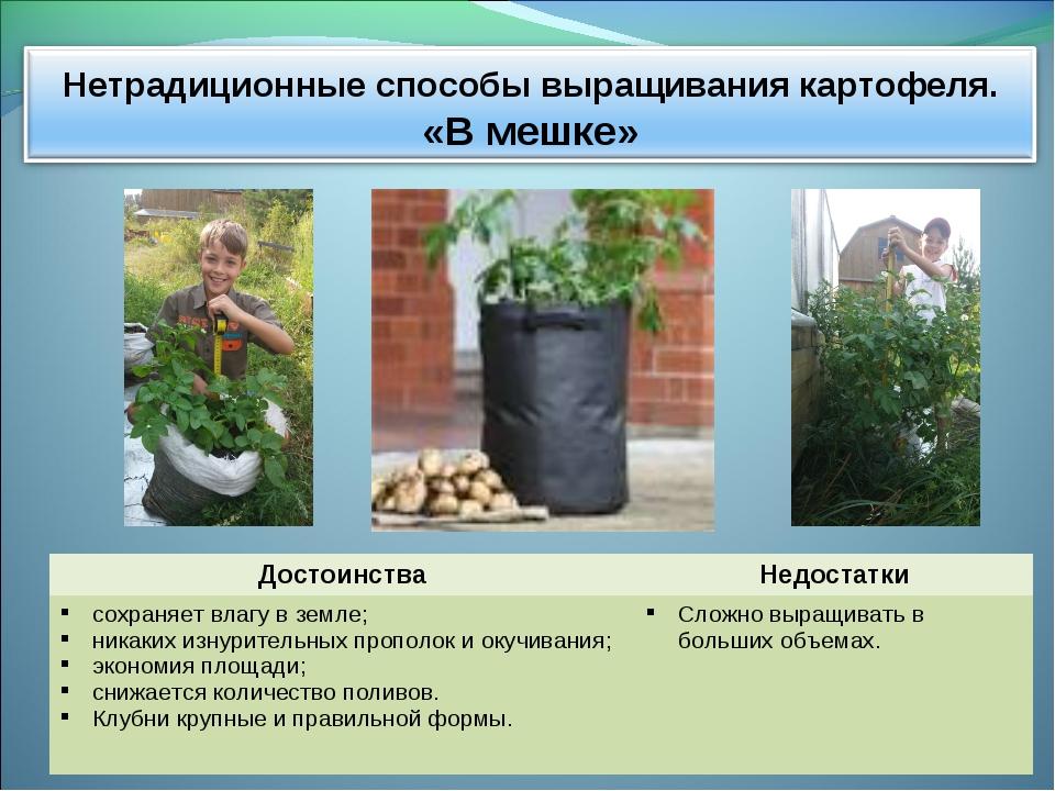 Нетрадиционные технологии выращивания картофеля