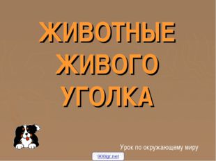 ЖИВОТНЫЕ ЖИВОГО УГОЛКА Урок по окружающему миру 900igr.net