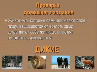 Проверка домашнего задания Животные, которые сами добывают себе пищу, защищаю