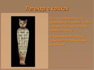 Легенда о кошках Тут-то и набросились на добро мыши и крысы. Чтобы избавиться
