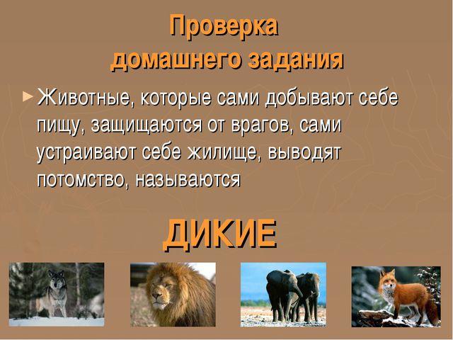 Проверка домашнего задания Животные, которые сами добывают себе пищу, защищаю...
