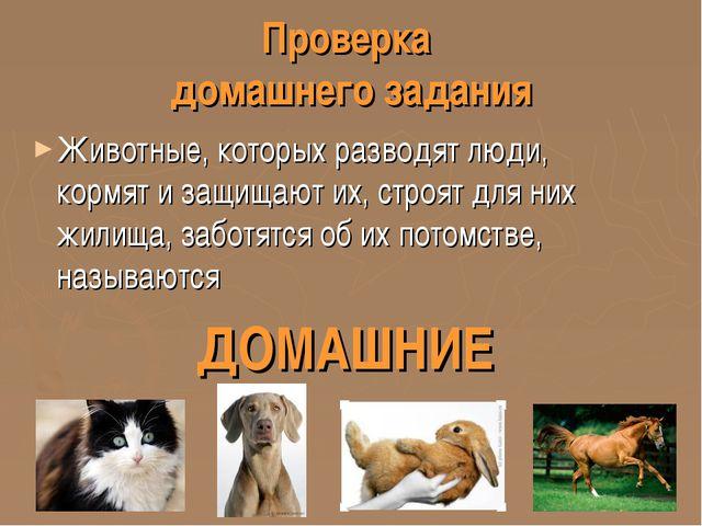 Проверка домашнего задания Животные, которых разводят люди, кормят и защищают...