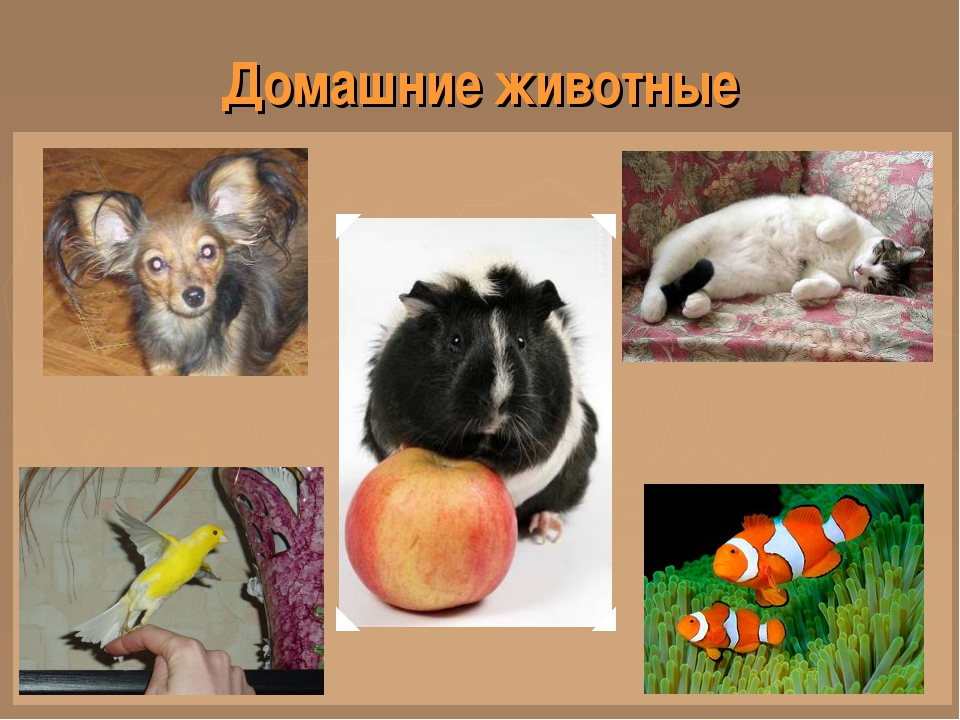 Как сделать проект на тему животные - Pumps.ru