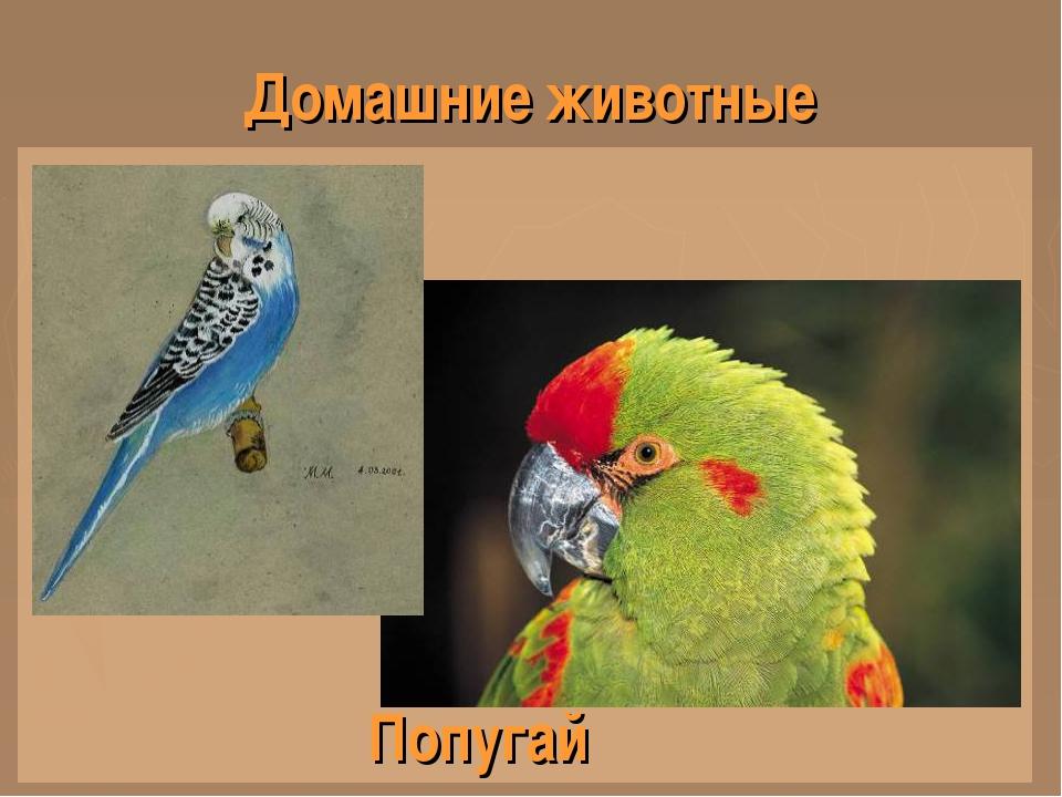 Домашние животные Попугай