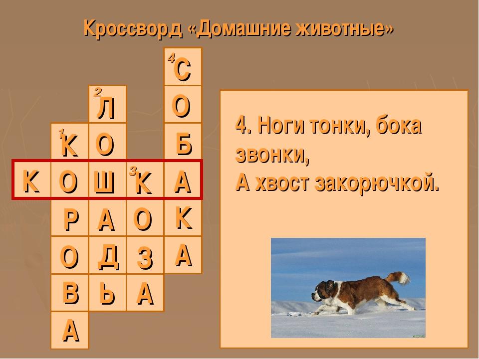 Кроссворд «Домашние животные» 1 2 3 4 К 4. Ноги тонки, бока звонки, А хвост з...