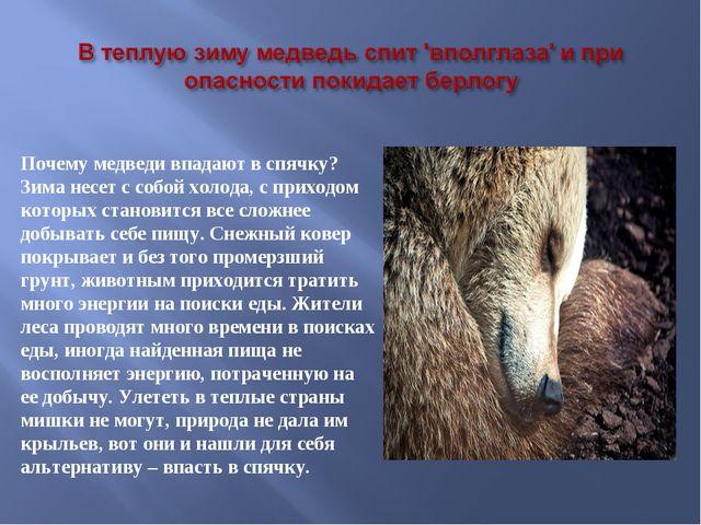 Почему медведи впадают в спячку? Зима несет с собой холода, с приходом которы...