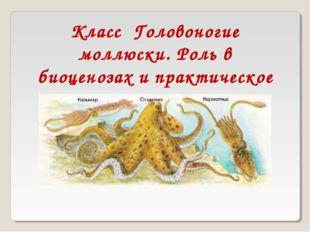Класс Головоногие моллюски. Роль в биоценозах и практическое значение.