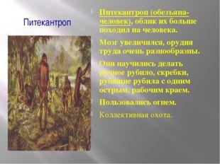 Питекантроп Питекантроп (обезъяна-человек), облик их больше походил на челове