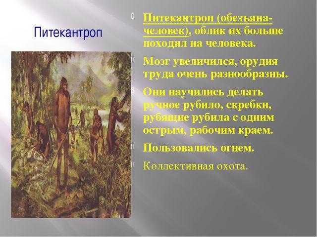 Питекантроп Питекантроп (обезъяна-человек), облик их больше походил на челове...