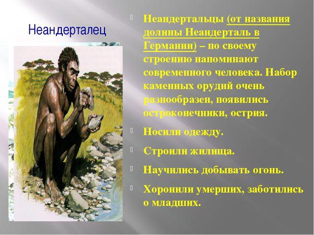 Неандерталец Неандертальцы (от названия долины Неандерталь в Германии) – по с...