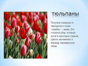 Получили название от персидского слова «тюрбан» – чалма. Это головной убор, к