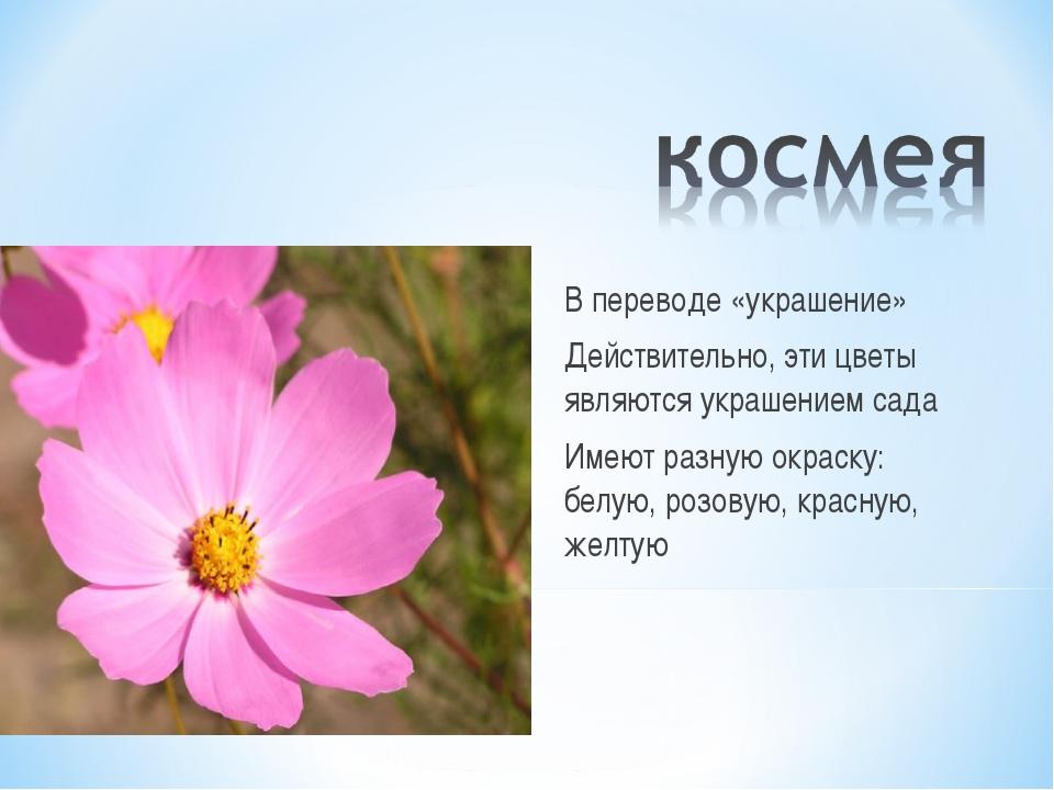 В переводе «украшение» Действительно, эти цветы являются украшением сада Имею...