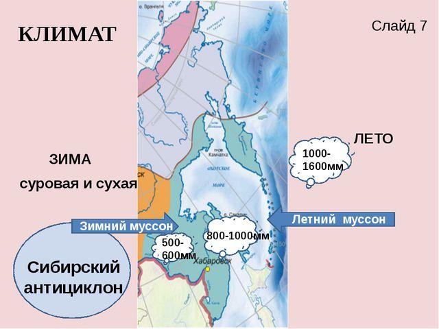 Сибирский антициклон ЗИМА ЛЕТО Летний муссон Зимний муссон КЛИМАТ 800-1000мм...