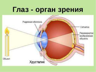 Ухо - орган слуха