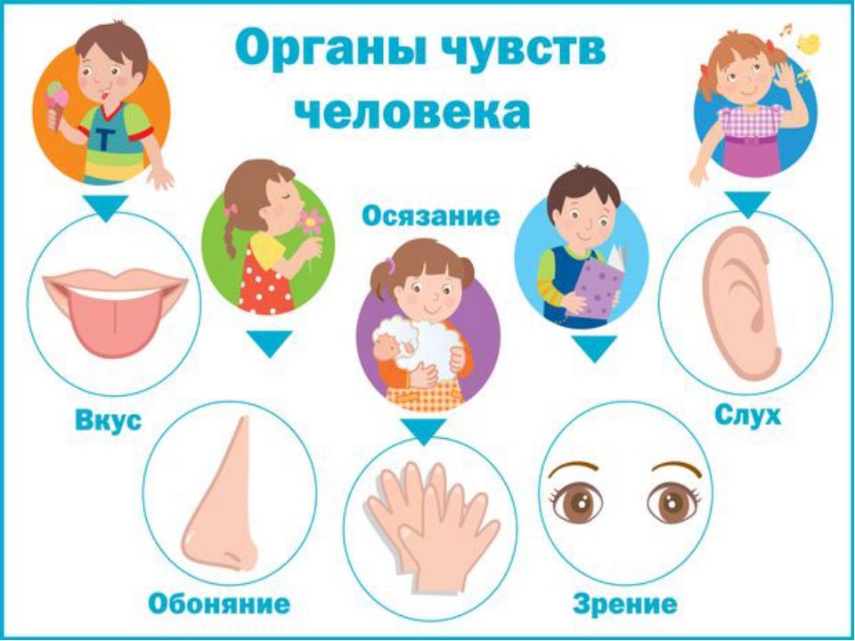 Глаз - орган зрения