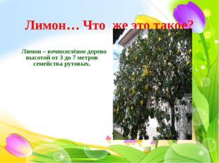 Лимон… Что же это такое?  Лимон – вечнозелёное дерево высотой от 3 до 7 метр