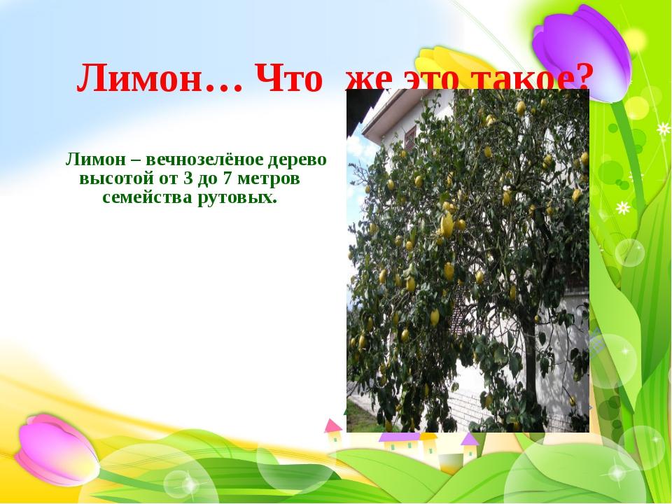 Лимон… Что же это такое?  Лимон – вечнозелёное дерево высотой от 3 до 7 метр...