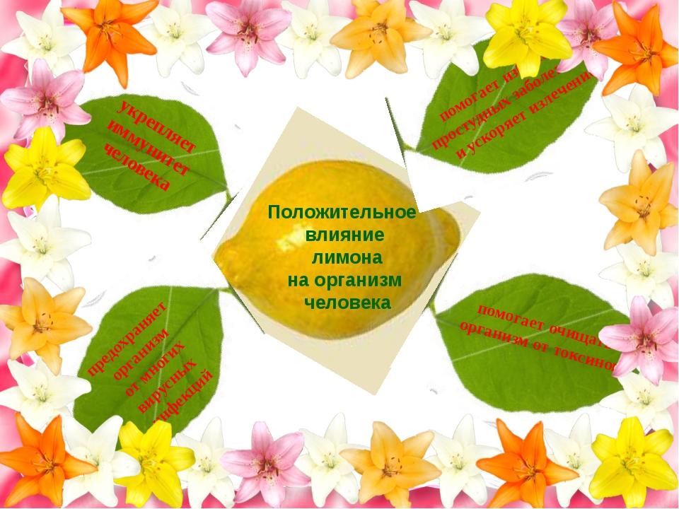 Положительное влияние лимона на организм человека укрепляет иммунитет человек...