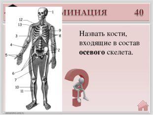Введите ответ Назвать кости, входящие в состав осевого скелета.