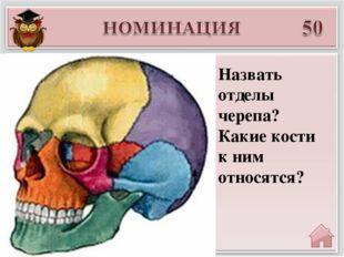 Введите ответ Назвать отделы черепа? Какие кости к ним относятся?