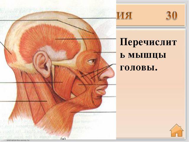 Введите ответ Перечислить мышцы головы.